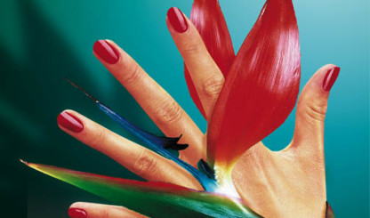 Bio sculture nails, special offer at Solexis